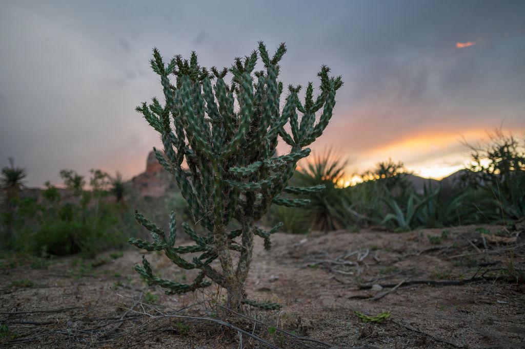 Sierra del Sarnoso